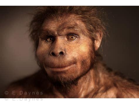 homo erectus homo erectus www pixshark com images galleries with a bite