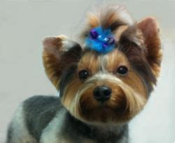 joypia yorkshire haircuts 82 best grooming styles images on pinterest dog grooming
