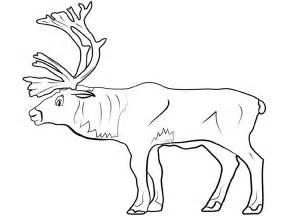 caribou color caribou coloring