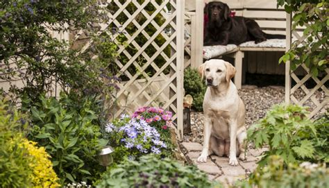puppy proofing backyard labrador proofing your garden