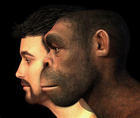 years vs human neanderthal vs human dna dnajar