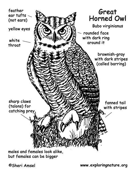pin owl diagram on pinterest