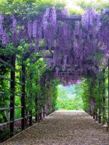 Climbing Plants For Pergolas - 15 climbing vines for lattice trellis or pergola gardens wisteria and flower