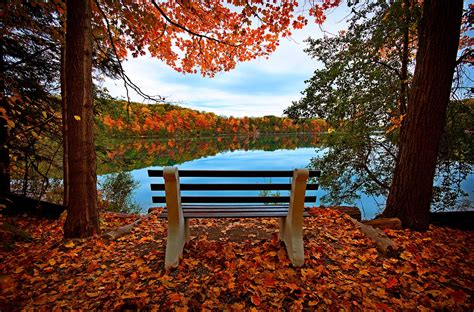 fall bench leaves trees forest autumn walk hdr nature river water