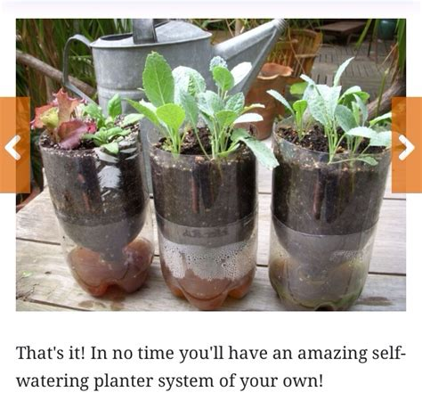 Water Bottle Planter by Upcycle A Water Bottle Into An Amazing Self Watering