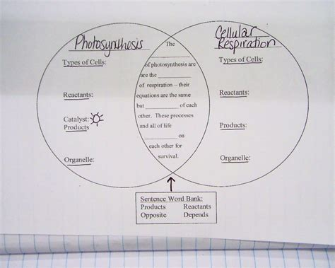 photosynthesis and respiration diagram wpusd twelve bridges middle school current unit