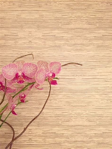 grasscloth peel and stick wallpaper 1000 images about decorating ideas inspiration on