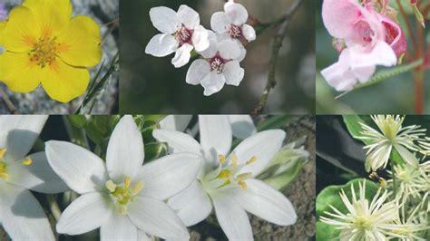 fiori di bach per neonati gravidanza neonati naturopataonline