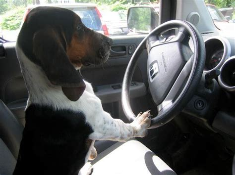 driving dogs dogs driving cars