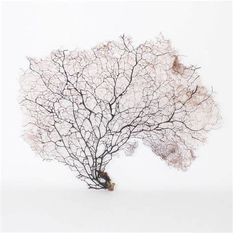 Giant Black Sea Fans For Sale At 1stdibs