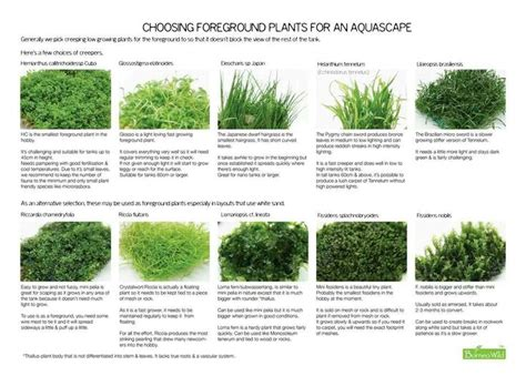aquascape plants list aquatic foreground plants aquascaping nano aquariums