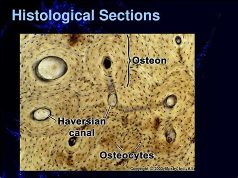histological sections ppt introduction to oral histology powerpoint
