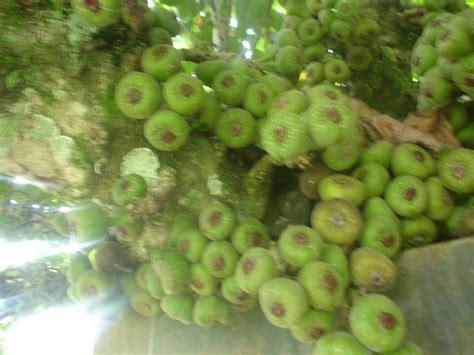 Modern Home Design Awards Hensel Design Studios Exotic Fruit In Argentina