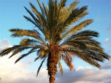 How Big Is 10 Square Meters palm trees production garden center fuerteventura