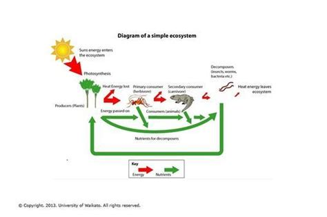 Diagram Showing How Nutrients And Energy Flow In An Ecosystem