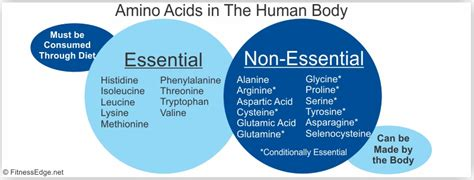 Do You Need Amino Acids To Detox Your by Using Amino Acid Supplements To Lose Weight
