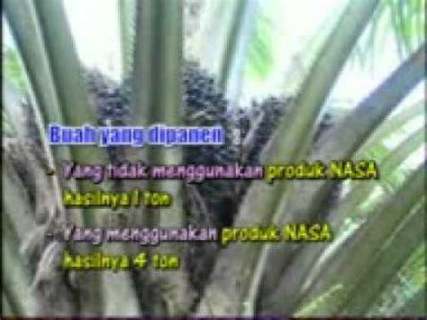 Bibit Sengon Palangkaraya budidaya tanaman karet 0818279339 doovi