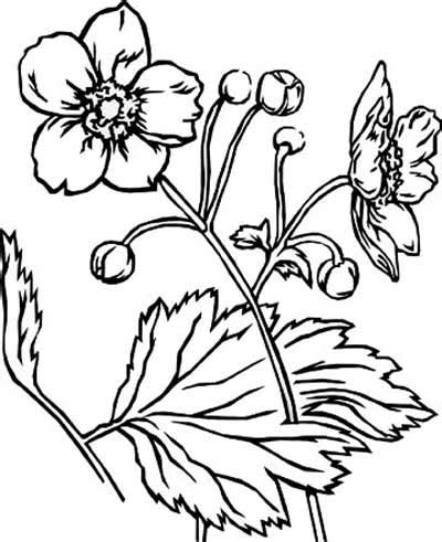 coloring pages flowers and animals beautiful flower coloring pages with delicate forms of