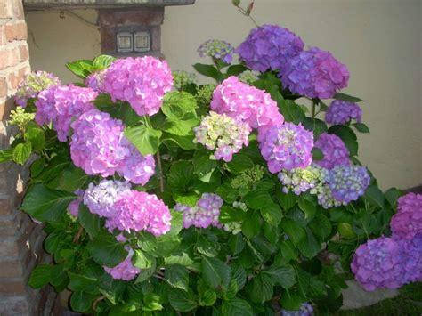 fiori e piante da balcone piante e fiori da balcone resistenti foto tempo libero