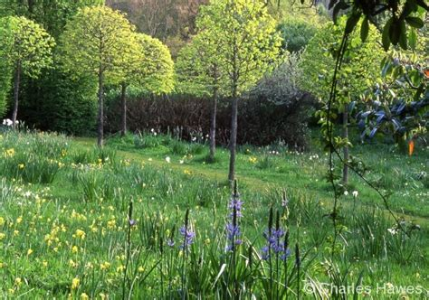 veddw garden wales the meadow has probably not been ploughed for over 200 years apart from a