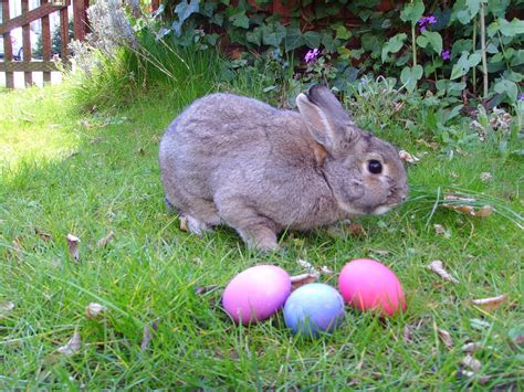 easter bunny the paranormal corner things about easter most don