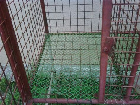 dog house for sale philippines steel dog cage for sale 5sets offer mabalacat panga philippines 4600