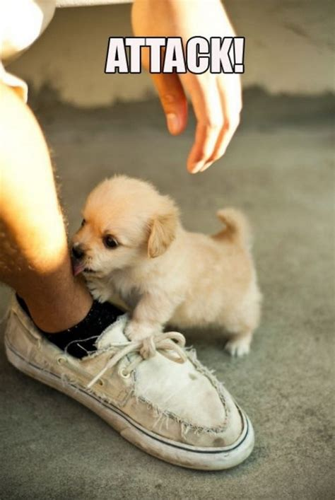 daily puppy puppy attack daily picks and flicks