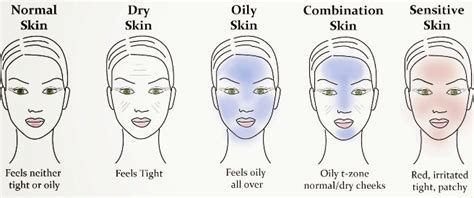 skin types image gallery skin types