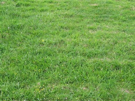 landscape grass by marc31 on deviantart