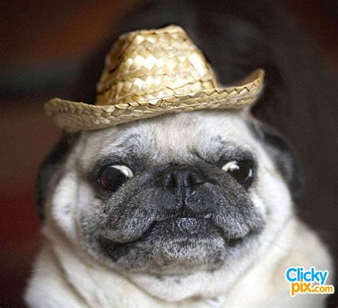 puppies in hats 250 best dogs in hats images on animals puppies and hats