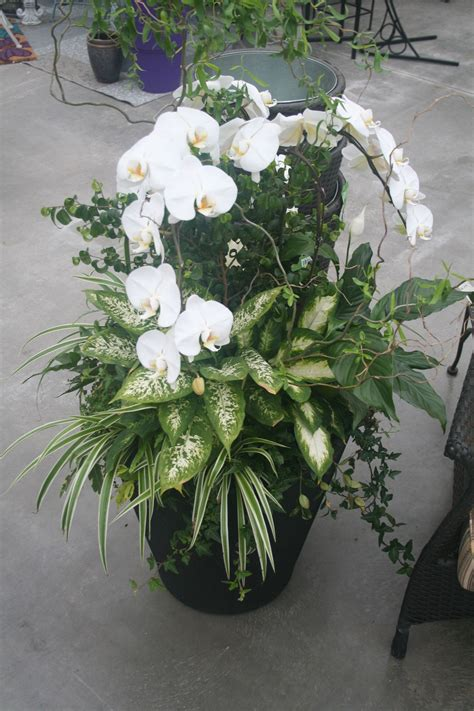 large indoor orchid planter orchids indoor orchids