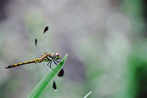 Snake Feeder snake feeder flickr photo