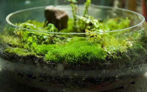 diy terrarium moss graffiti 28 moss and succulent