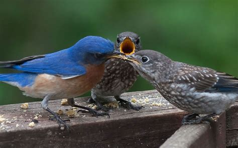 How To Keep Birds Patio by Attracting Birds To Your Garden