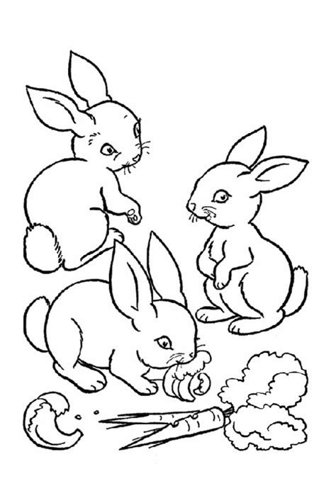 can rabbits see color color in a bunny coloring page in stead of buying some pets