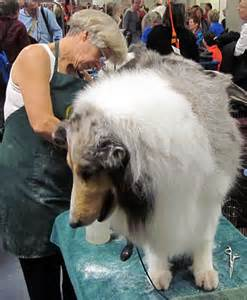 Service dogs and dog breeds of the 135th westminster dog show