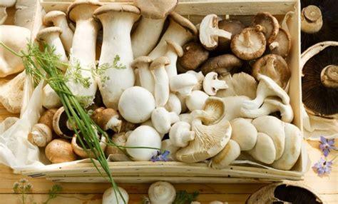 funghi da cucinare funghi commestibili quali sono e come prepararli al