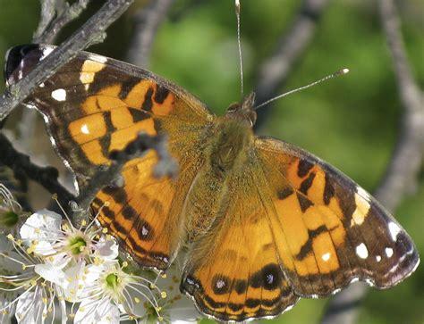 Backyard San Antonio Butterflies Butterfly Shaped Backyard And Beyond