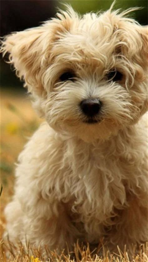 real puppies for free puppies live wallpaper for android puppies free for tablet and phone