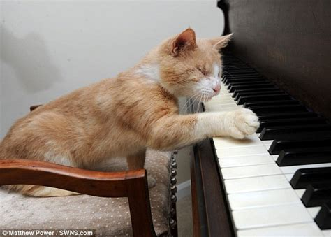 who plays cat stevie the blind piano cat who to