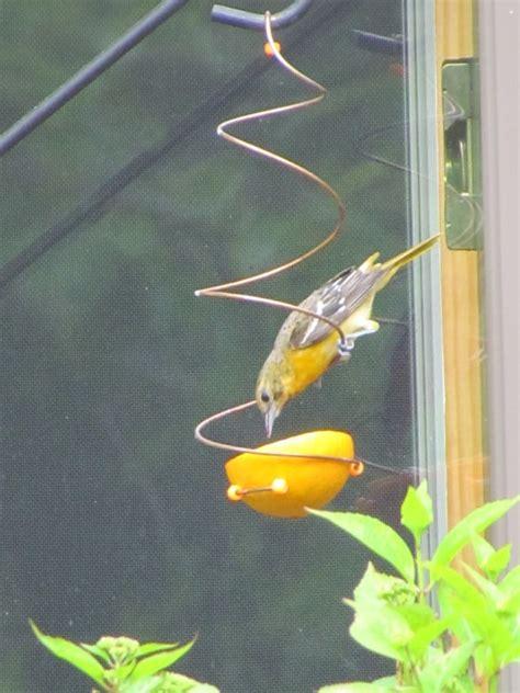 baltimore oriole feeders gardening garage pinterest