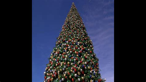 biggest christmas tree in every state