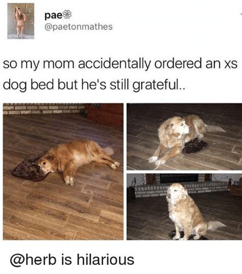 Dog Mom Meme - 25 best memes about bedding bedding memes