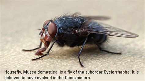 get rid of house flies how to get rid of flies tips advice to rid your home of house flies