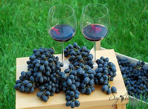 imagenes de como hacer uvas 161 el complejo proceso de elaboraci 243 n de vino paso a paso