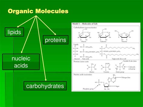 carbohydrates questions and answers pdf organic macromolecules worksheet answer
