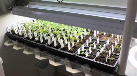 seedling  watering system youtube
