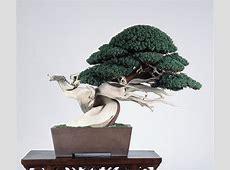 第34回作風展 内閣総理大臣賞 真柏 | 盆栽芸術家・秋山実(BONSAI Artist, AKIAYMA ... Minoru Bonsai