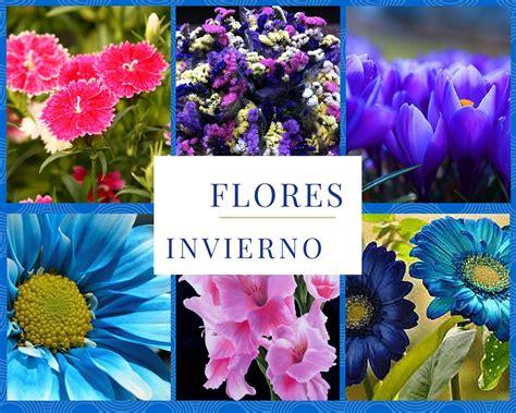imagenes flores invierno pr 237 mulas creciendoentreflores