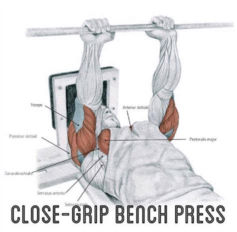 muscles worked by bench press 3 moves for a huge triceps valentin bosioc